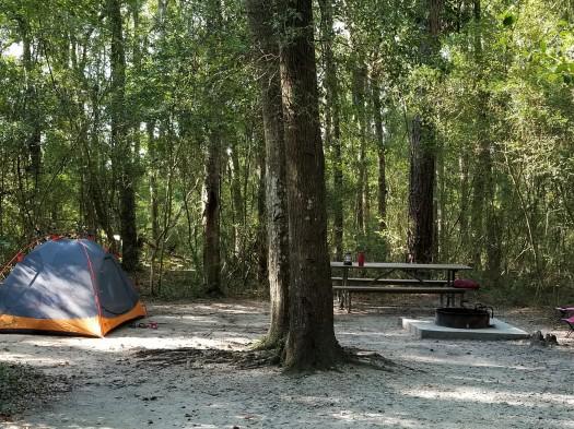 Campsite Carolina Beach State Park.jpg