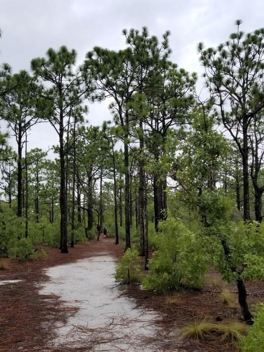 Trail NC Beach State Park