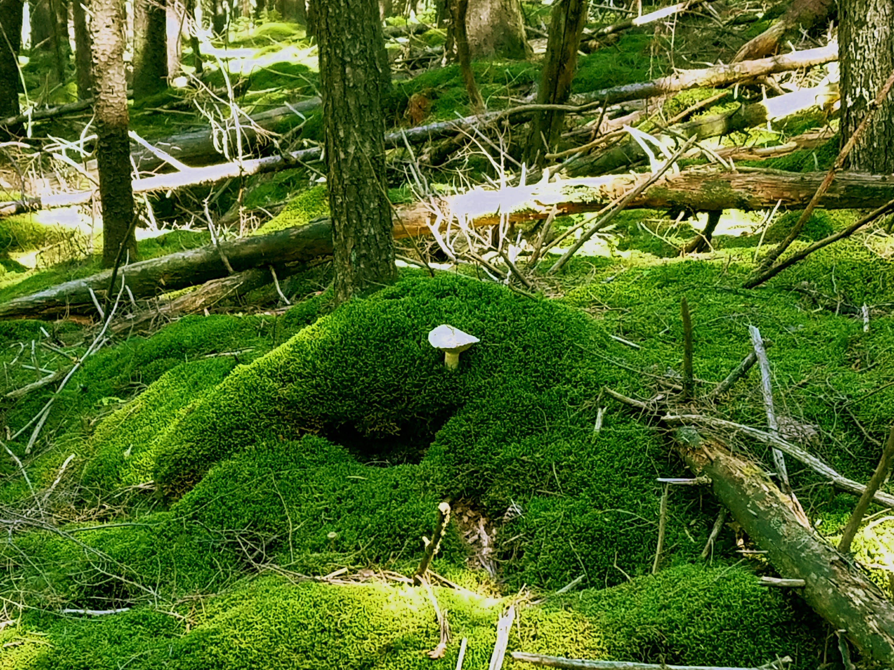 Toadstool mossy cottage